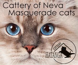 Hatanga cattery | Neva Masquerade cats