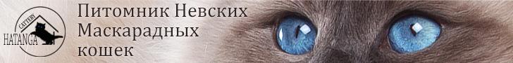 Питомник Hatanga | Невские маскарадные кошки